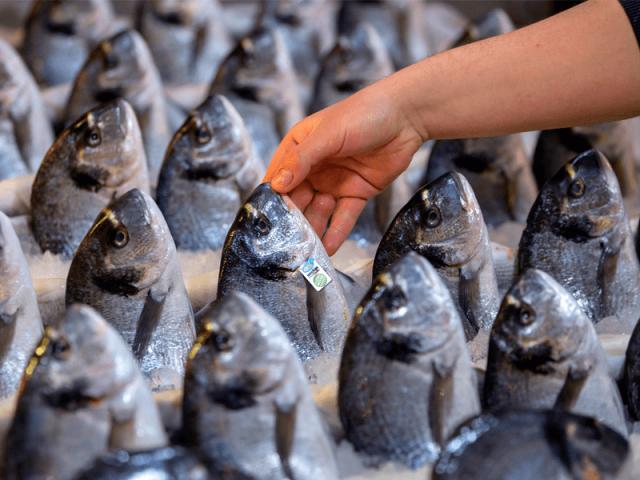 THY Kargo Ege'nin Balıklarını ABD'ye Taşıyacak